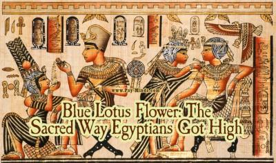 Blue Lotus Flower The Sacred Way Egyptians Got High main