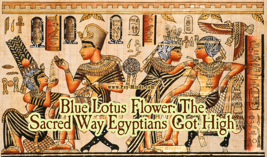 Blue Lotus Flower The Sacred Way Egyptians Got High main
