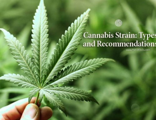 Cannabis Strain: Types and Recommendations