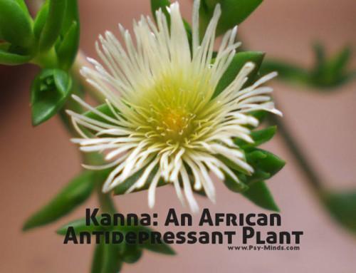 Kanna: An African Antidepressant Plant