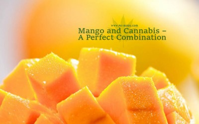 Mango and Cannabis – A Perfect Combination