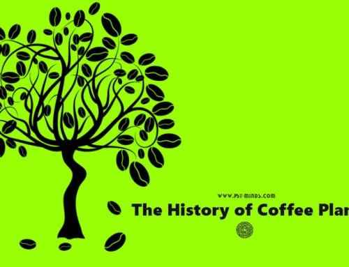 The History of Coffee Plant