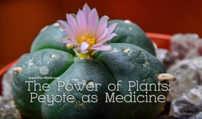 The Power of Plants Peyote as Medicine