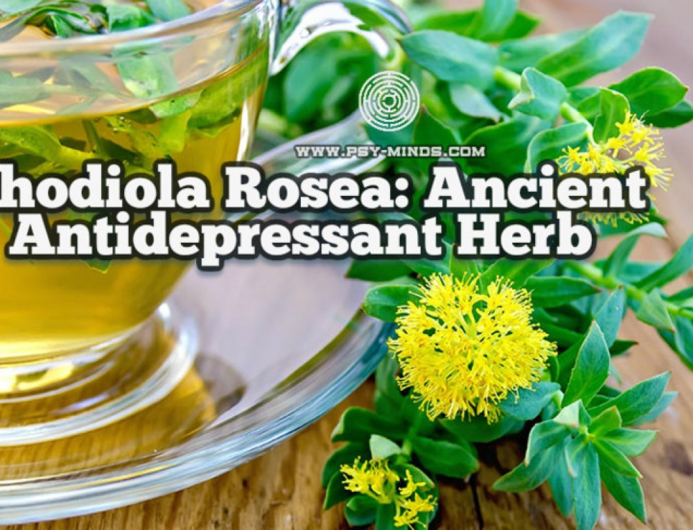 Rhodiola Rosea: Ancient Antidepressant Herb