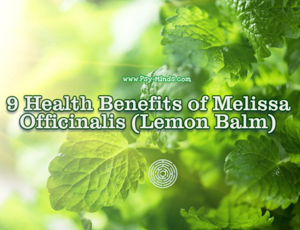 9 Health Benefits of Melissa Officinalis (Lemon Balm)