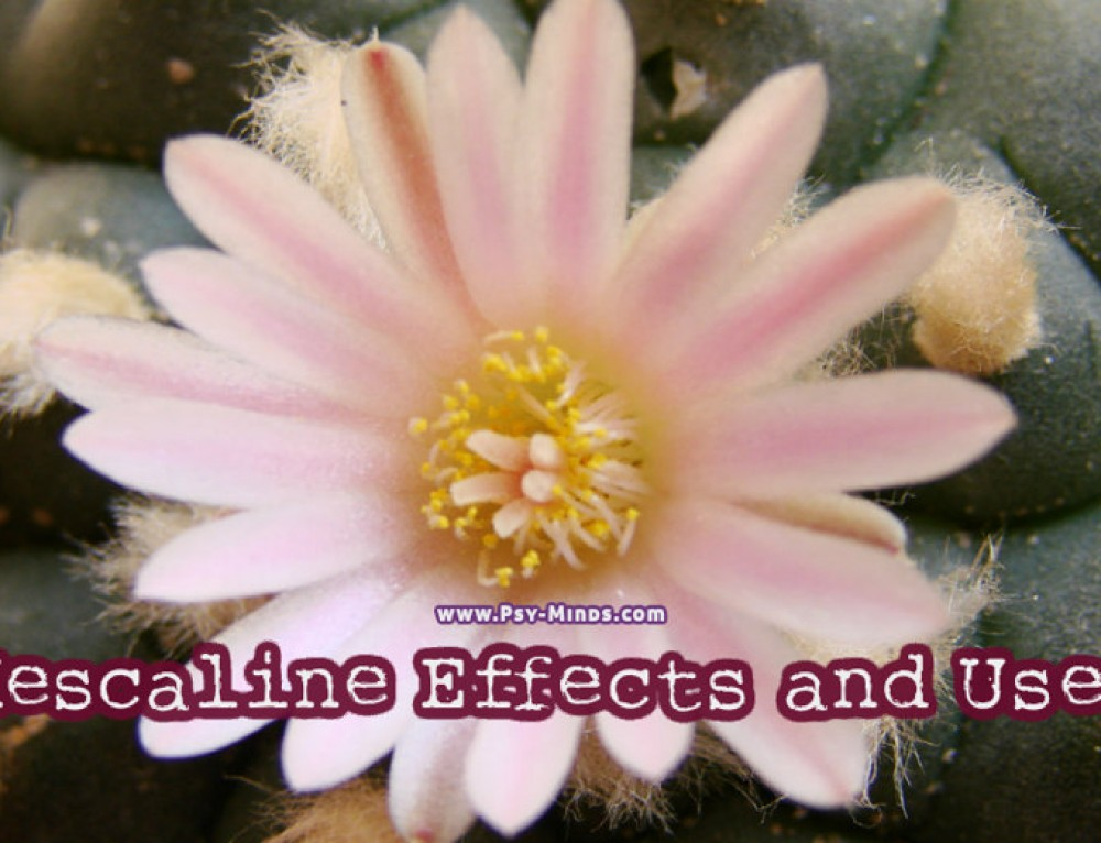 Mescaline Effects and Uses