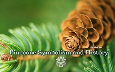 Pinecone Symbolism and History