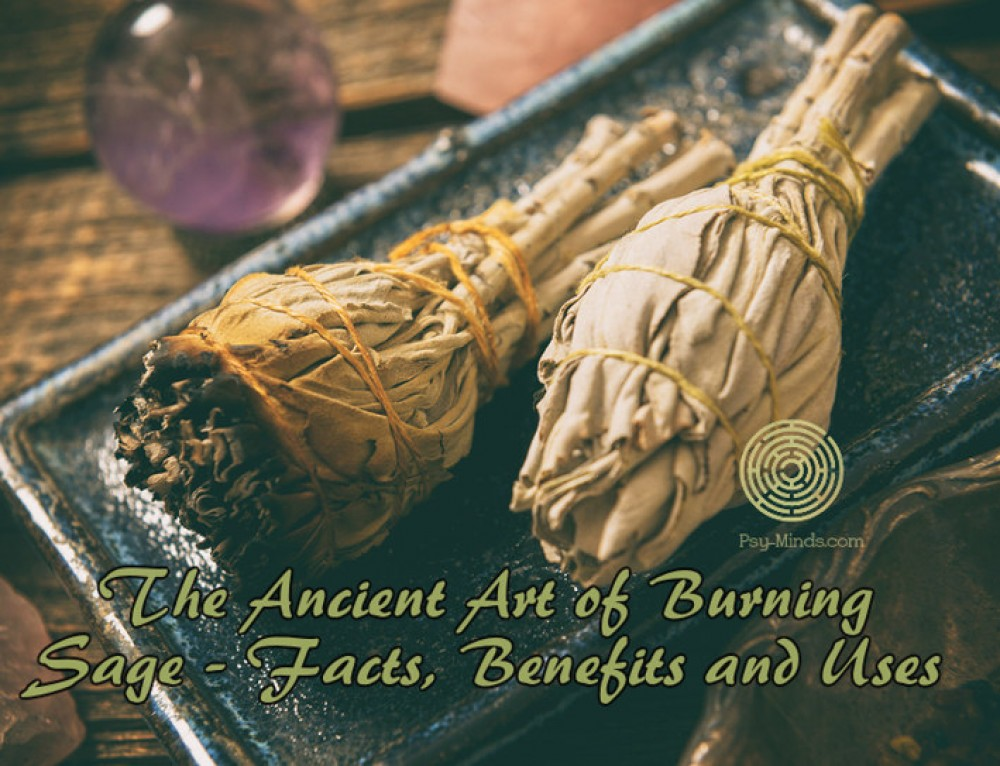 The Ancient Art of Burning Sage – Facts, Benefits and Uses