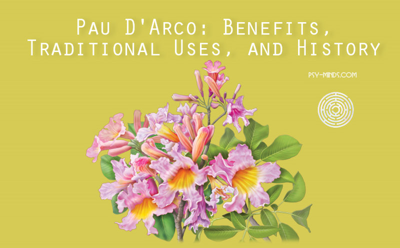 Pau D'Arco Benefits, Traditional Uses, and History