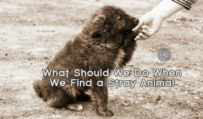 What Should We Do When We Find a Stray Animal