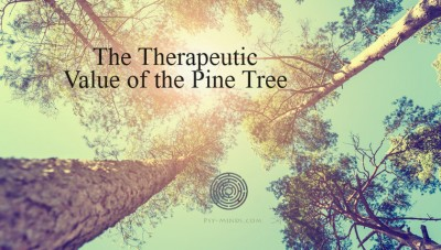 The Therapeutic Value of the Pine Tree