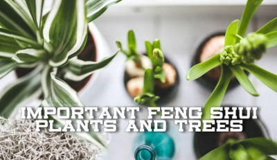 Important Feng Shui Plants and Trees