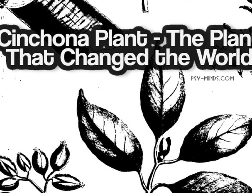 Cinchona Plant – The Plant That Changed the World