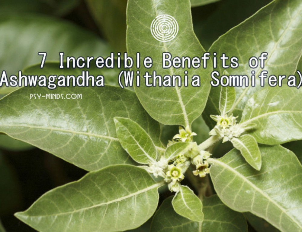 7 Incredible Benefits of Ashwagandha (Withania Somnifera)
