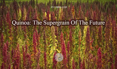 Quinoa The Supergrain Of The Future