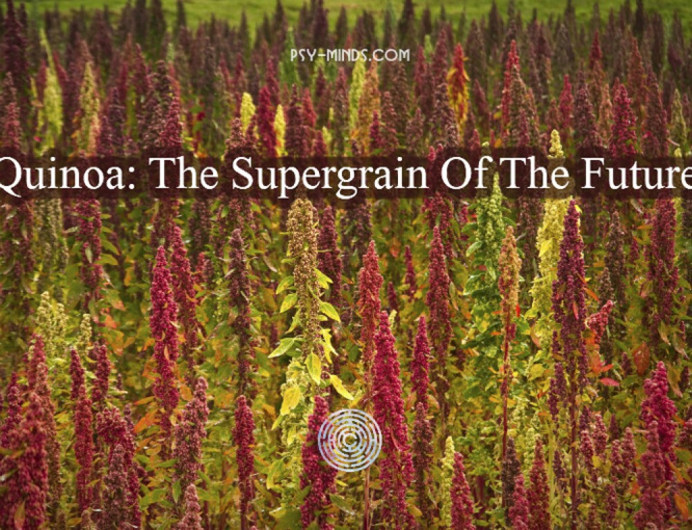 Quinoa: The Supergrain Of The Future