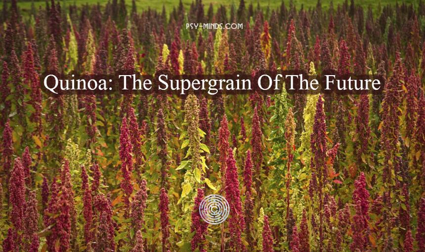 Quinoa The Supergrain Of The Future