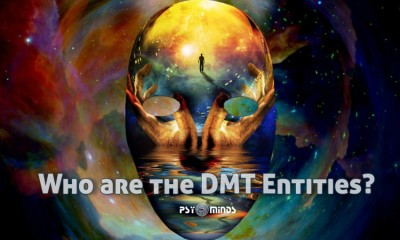 Who are the DMT Entities