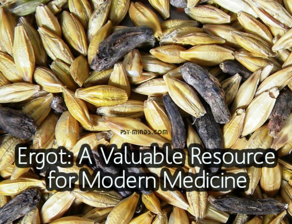 Ergot: A Valuable Resource for Modern Medicine