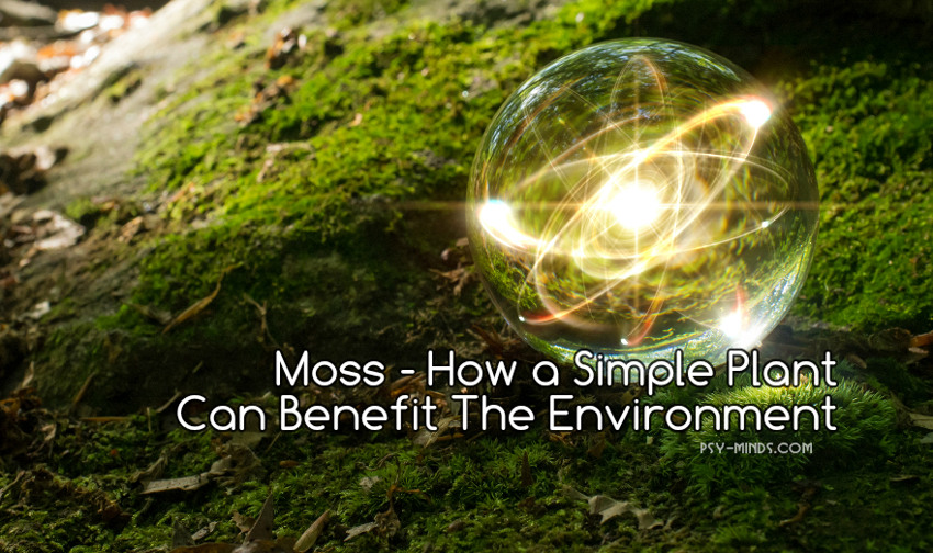 Moss - How a Simple Plant Can Benefit The Environment