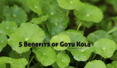 5 Benefits of Gotu Kola