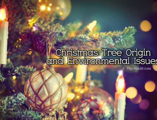 Christmas Tree Origin and Environmental Issues
