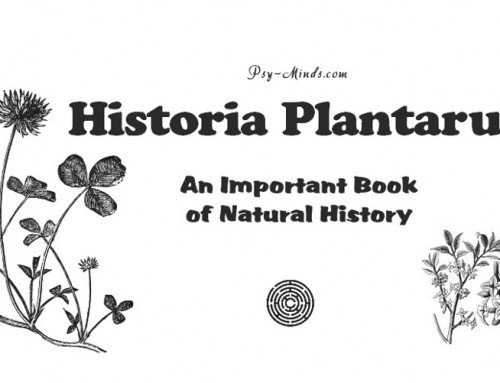 Historia Plantarum – An Important Book of Natural History