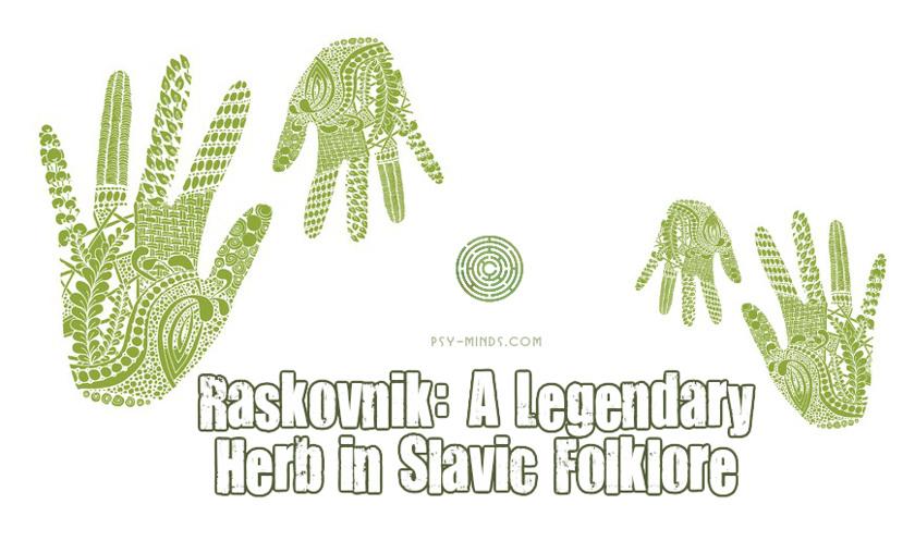 Raskovnik A Legendary Herb in Slavic Folklore