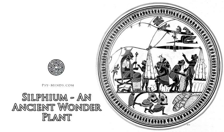 Silphium - An Ancient Wonder Plant